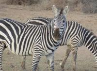 serengeti-safaris.jpg