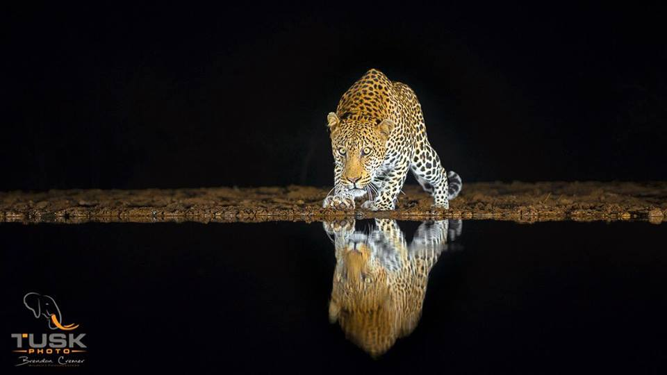 Leopard image_tusk Photo